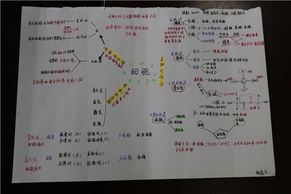 整理《细胞的结构和功能》优秀作品